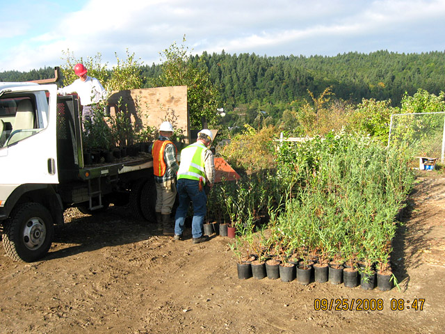 Wheeler Bay: Native plants being delivered to site for planting on slope.